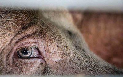 Dierenrechten Alliantie reageert naar premier Rutte op aanval van 'landbouw'- en vissector